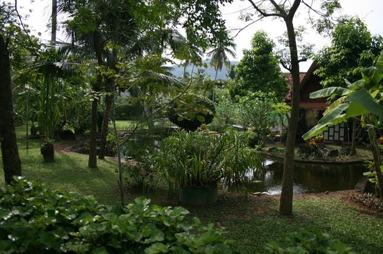 Duangjitt Resort & Spa: Le parc vu de la chambre