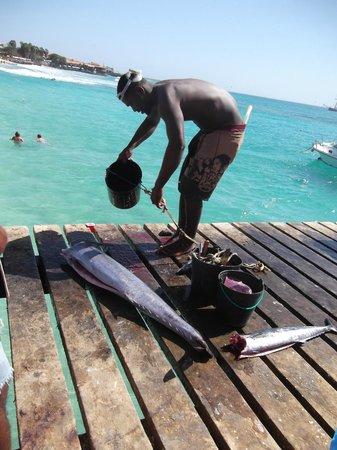 Hotel Oasis Belorizonte: fish