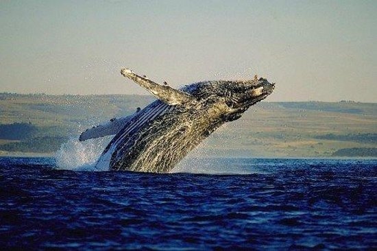 De Kelders Private Villa: whales !!!!