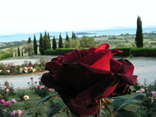 Relais Borgo Torale: View of Lake Trassimeno from Torale