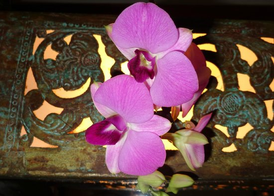 Casa Colombo: orchids by the bed
