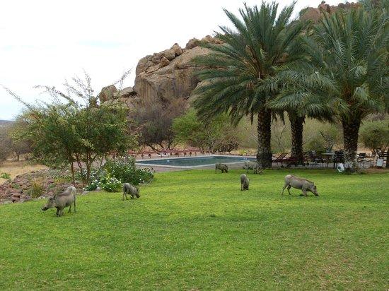 Ai-Aiba The Rock Painting Lodge: la tonte du matin