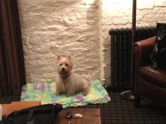 Hotel du Vin & Bistro: ... dog beds provided and water bowls ...