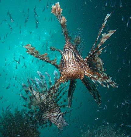 Seaventures Dive Rig: house reef