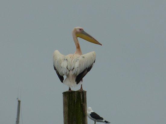 Protea Hotel Pelican Bay: l'emblème du site