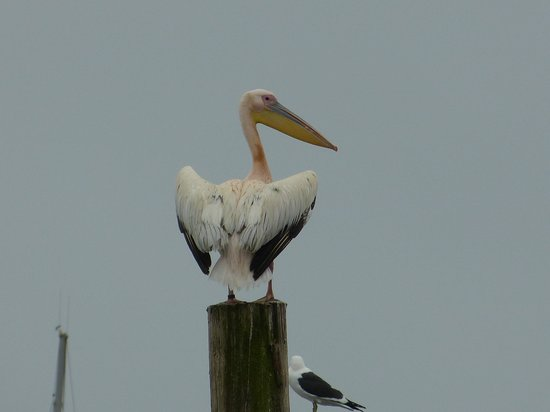 Protea Hotel by Marriott® Walvis Bay Pelican Bay: l'emblème du site