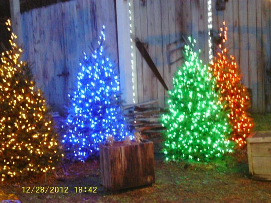 A Few Of Many Lighted Christmas Trees