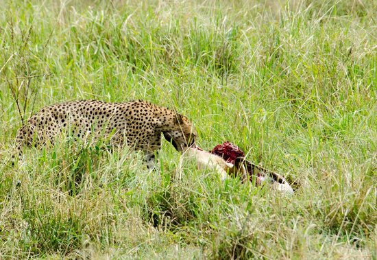 Tarangire Safari Lodge : Abundant wildlife