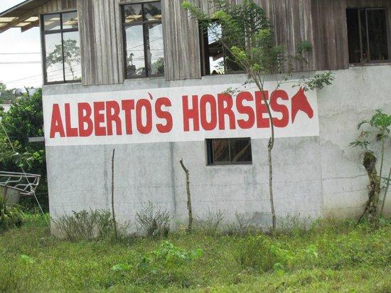 Alberto's Horses: Don't use anyone else!