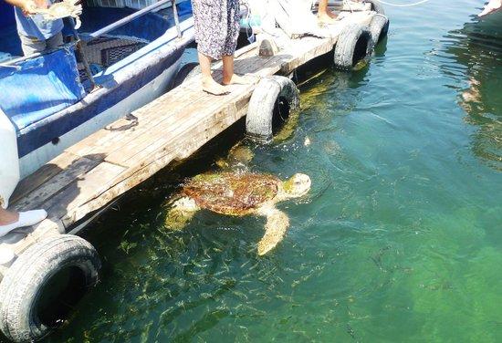 Oyster Residences: Turtle beach tour