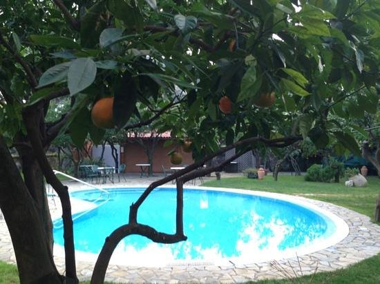 Antiche Mura Hotel: Pool and orchard