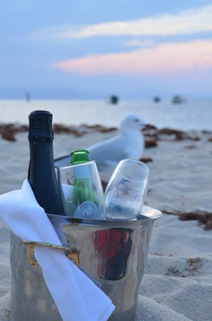 Green Island Resort: sunset picnic seagull photo bomb