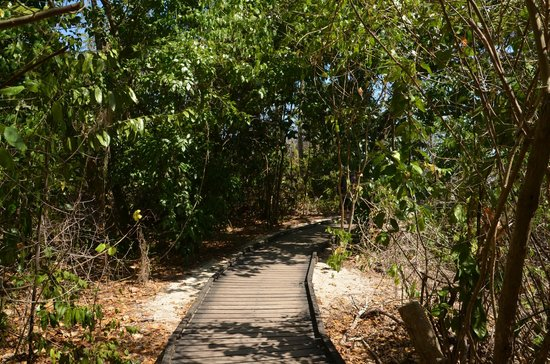 Green Island Resort: path into the jungle