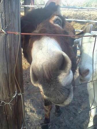 "The Smoakhouse Ranch: One of the ranch's ""residents"" saying hello"