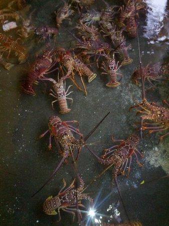 بارادايس بيتش هوتل: Lobster pool 