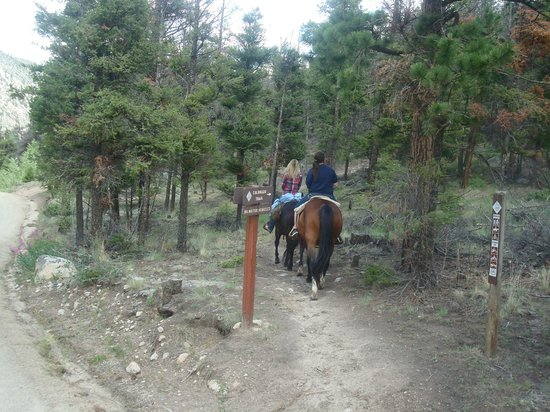 Harvard City Riding Stables: Going up the Colorado Trail