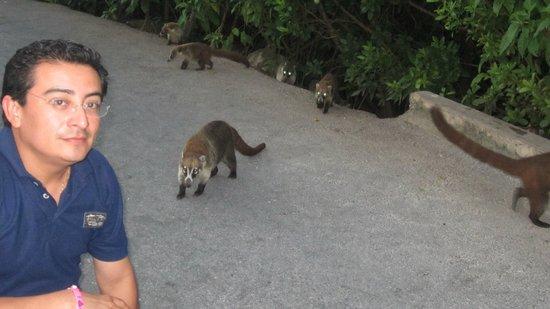 Hacienda Tres Ríos: nos topamos con varios animales como pizotes, mapaches y peces de multicolores