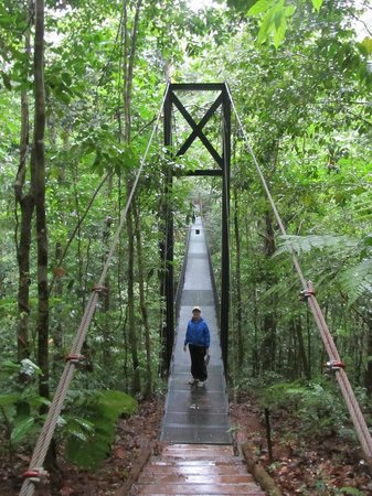 Bosque del Cabo Rainforest Lodge: Suspension bridge on lodge trail