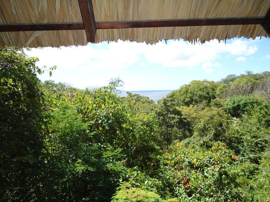 Buena Vista Surf Club: The view from our tree-house window!