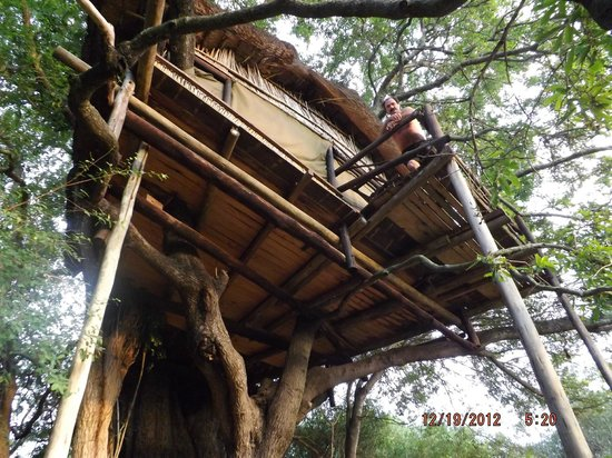 Tremisana Game Lodge: Treehouse #2 balcony