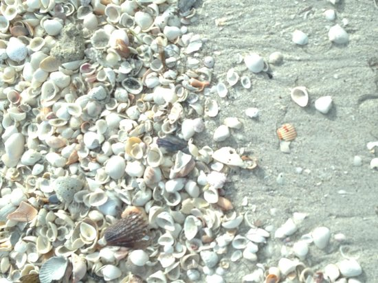 Boca Grande, Floryda: Lots of shells!