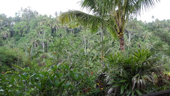 Villa Sarna Ubud: Views