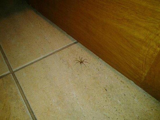 Manquehue Santiago Las Condes: Esta es la 2da araña de rincón que encuentro en 3 días que llevo en el hotel.