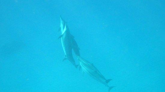 Ko Olina Ocean Adventures: Spinner Dolphins