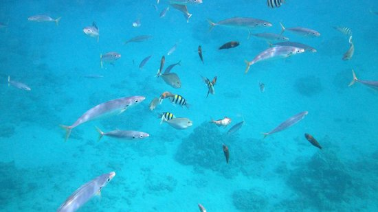 Ko Olina Ocean Adventures: Large variety of fish