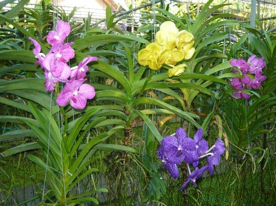 蘭花和蝴蝶園