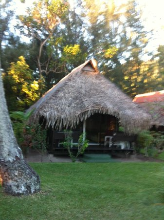 Hotel Hibiscus: my bungalow again. sooo cute! roosters crowing and running about