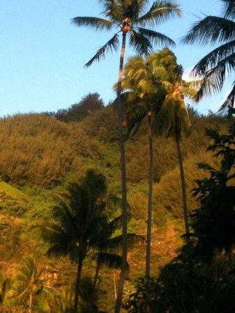 Hotel Hibiscus: hills behind us ...
