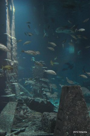 The Reef Atlantis, Autograph Collection: A tour of the Dig after dinner.