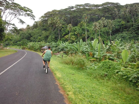 Moorea Surf Inn: Using the provided bicycles
