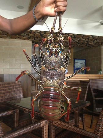 Kaani Beach Hotel: lobster in the restaurant
