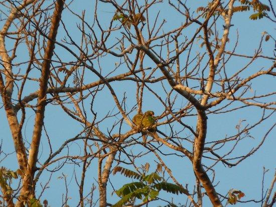 Hotel Casacolores: Papagei