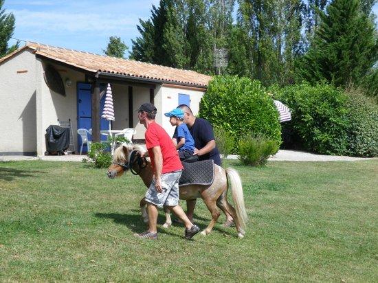Gîtes la Grange du Cheval Blanc : Caramel - Un poulain très calme pour les petits