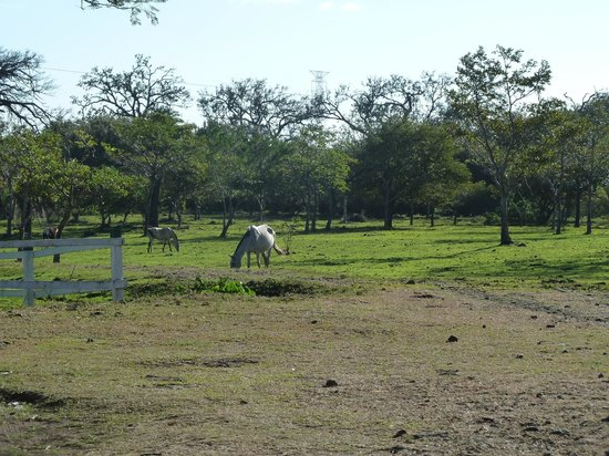 Rincon de la Vieja Lodge: Pferdekoppel
