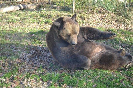 Giardino Zoologico di Pistoia : L'orso Bruno