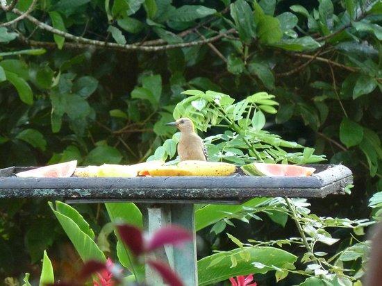 B&B Hotel Sueño Celeste: Vögel beim Frühstück