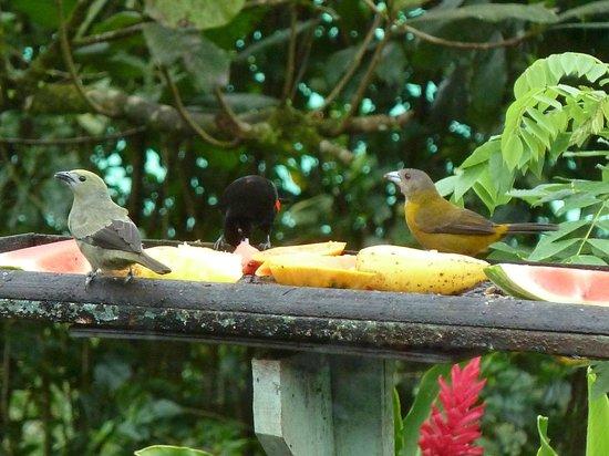 B&B Hotel Sueno Celeste: Vögel beim Frühstück