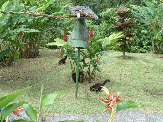Arenal Observatory Lodge & Spa: Garten