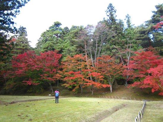 Motsu-ji Temple: 紅葉