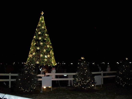 JW Marriott Washington, DC: National tree at night (crowded)