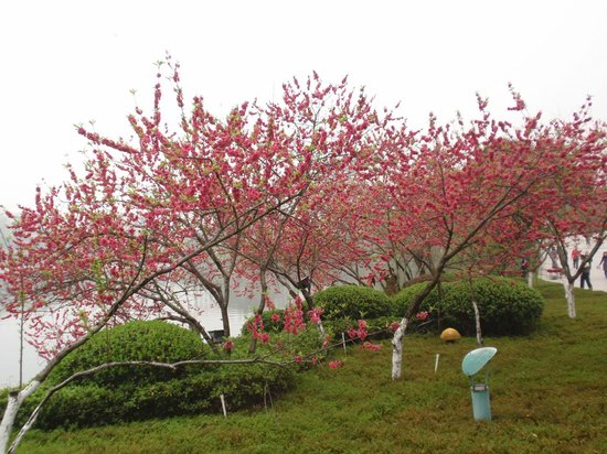 Merryland Resort Hotel: Blooming Flowers in Spring