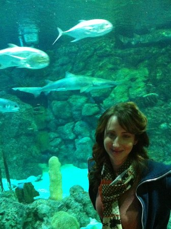 Moody Gardens: Shark Tank in the Aquarium