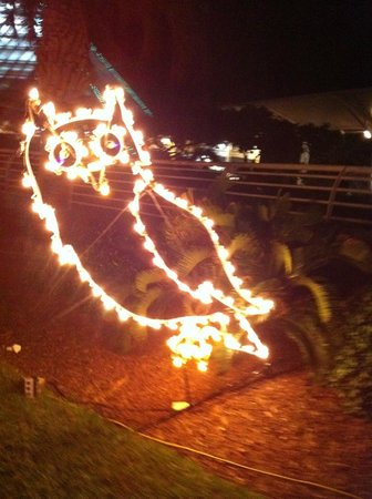 Moody Gardens: Owl in the Festival of Lights