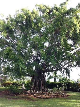 High Hope Estate: Stunning trees