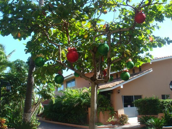Torres Mazatlan Resort: Trees trimmed on the grounds