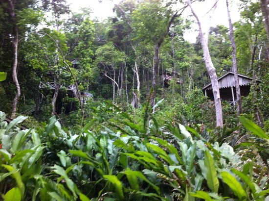 Jungle Bay, Dominica: rooms set against the jungle